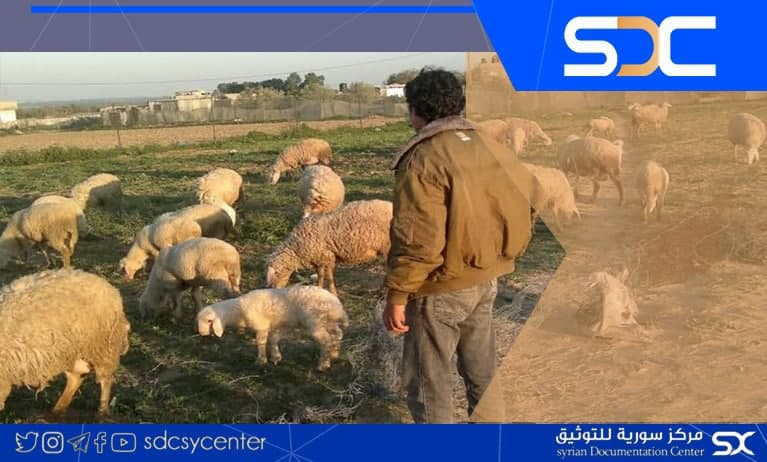 Militants stole a large number of livestock after torturing their shepherd in Hasakah countryside